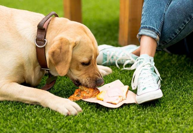 Makanan Manusia Yang Boleh Dan Tidak Boleh Untuk Anjing