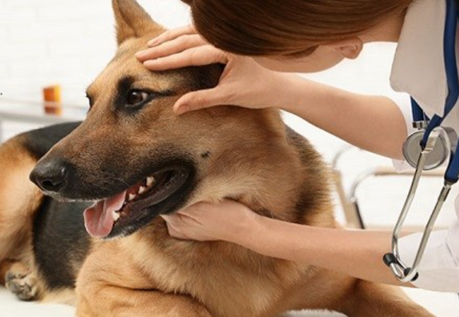 8 Penyakit Mata Yang Umum Pada Anjing