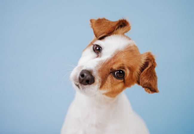 6 Hal Penyebab Anak Anjing Menjadi Bingung