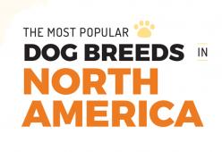 Ras Anjing Yang Paling Populer Di Amerika Utara