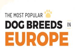 Ras Anjing Yang Paling Populer Di Eropa