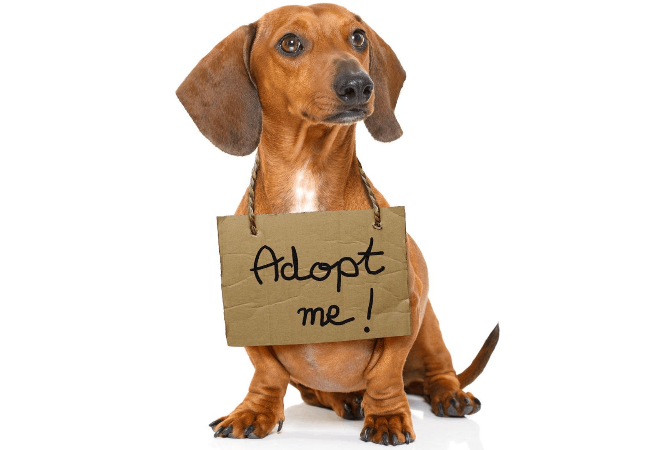 Yang Perlu Dipersiapkan Sebelum Mengadopsi Anjing