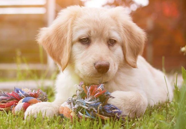 5 Hal Yang Harus Dihindari Pemilik Anak Anjing