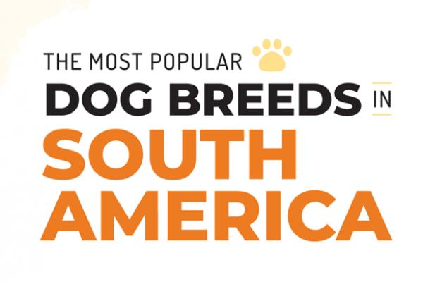 Ras Anjing Yang Paling Populer Di Amerika Selatan