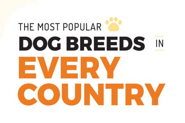 Ras Anjing Yang Paling Populer Di Masing-Masing Negara