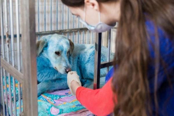 Misteri Anjing Berwarna Cerah Di Rusia