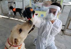 Mampukah Anjing Mendeteksi Covid?, Inilah Yang Dikatakan Sains