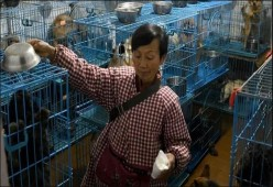 Baik Hati, Wanita Ini Pelihara 1.300 Anjing dan 100 Kucing Terlantar