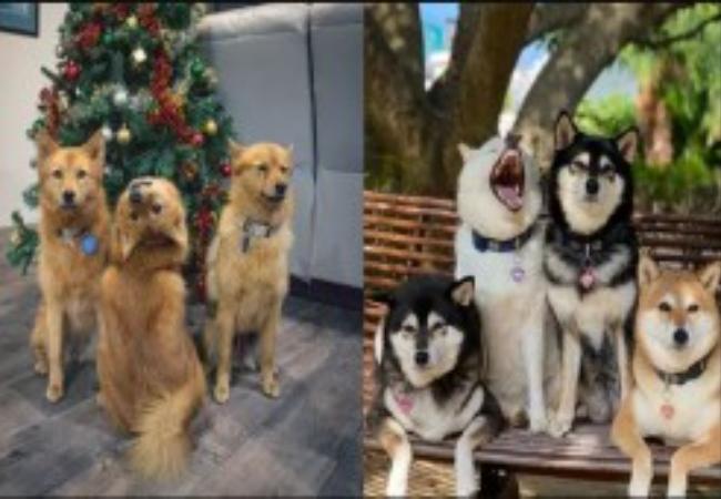 Pose Unik Dua Anjing Ini Justru Curi Perhatian