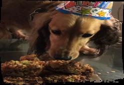 'Kue Daging' - Resep Makanan Anjing Mudah dan Enak