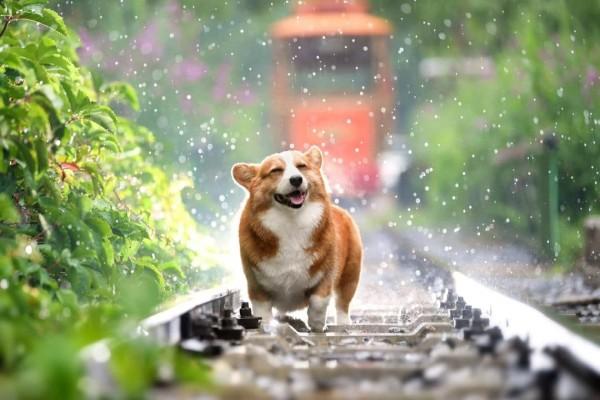 Aktifitas Menyenangkan Di Rumah Bersama Anjing Anda