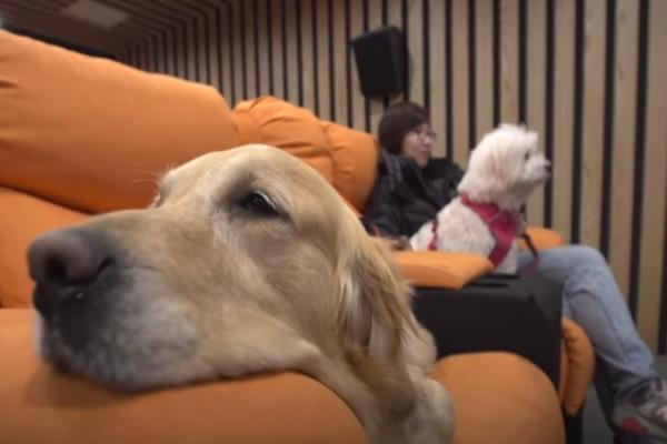 Hotel Mewah Khusus Anjing Di Tiongkok