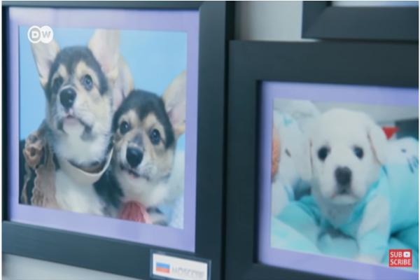 Bisnis Kloning Anjing Di Korea Selatan